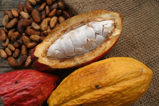 Cacao ecuatoriano